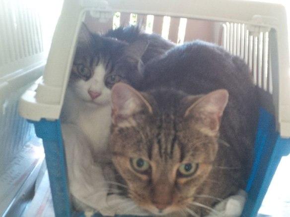 Mischief and Henrietta