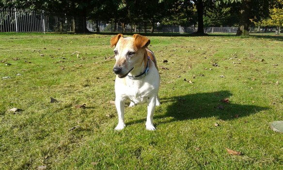 Tom sent us this lovely photo of Molly in Glasgow Green park