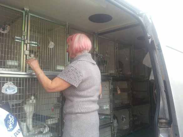 Mal greets her cats on their arrival