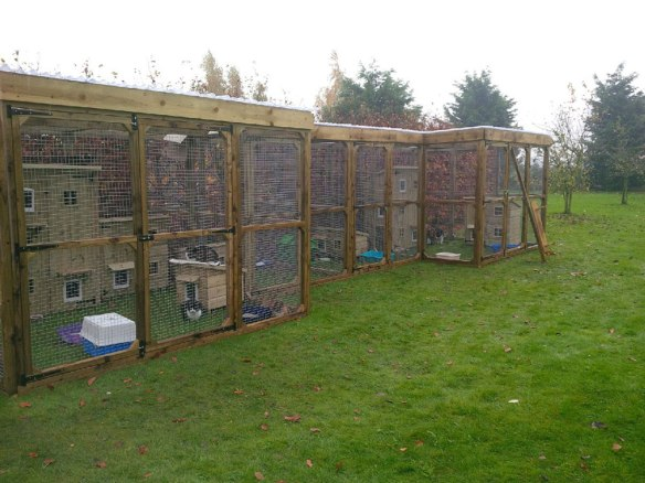 The cattery in all its glory