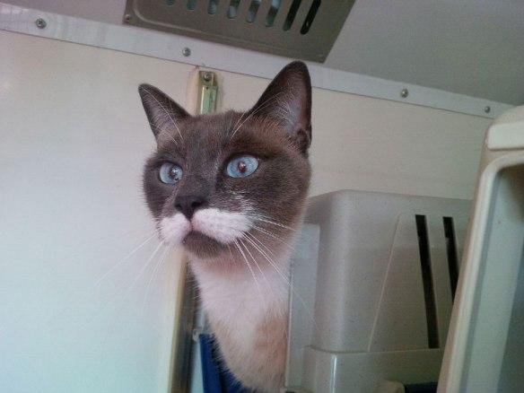 Moustachioed Nox