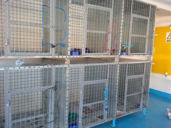 The cages all kitted out