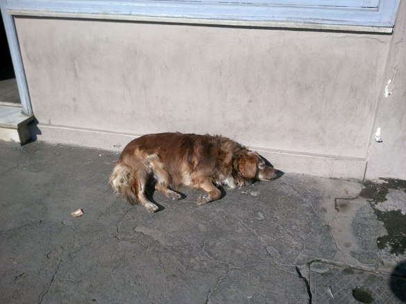 One of the many homeless dogs on Lesvos…