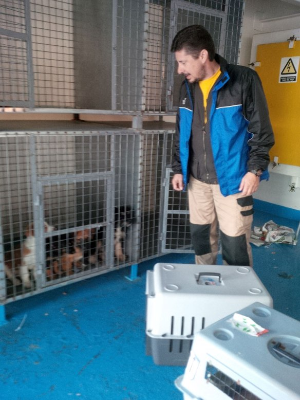 Akis took control of disembarking the seven dogs from Lesvos. Here he is collecting the puppies, telling them to be good for him.
