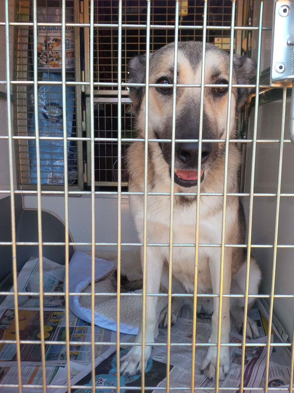 Lucy from Lesvos is a calm and friendly girl