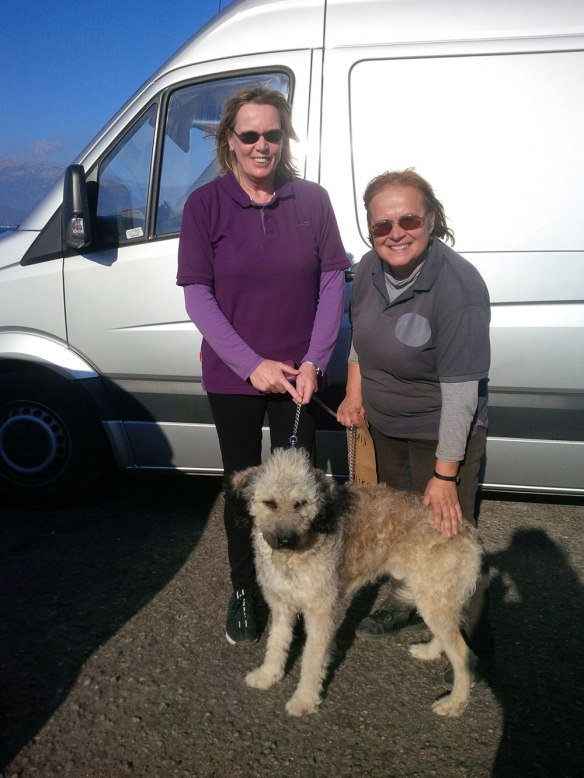 Anne (L) and Panagiota (R) arranged for Niko to travel to join new owner Elizabeth in Scotland