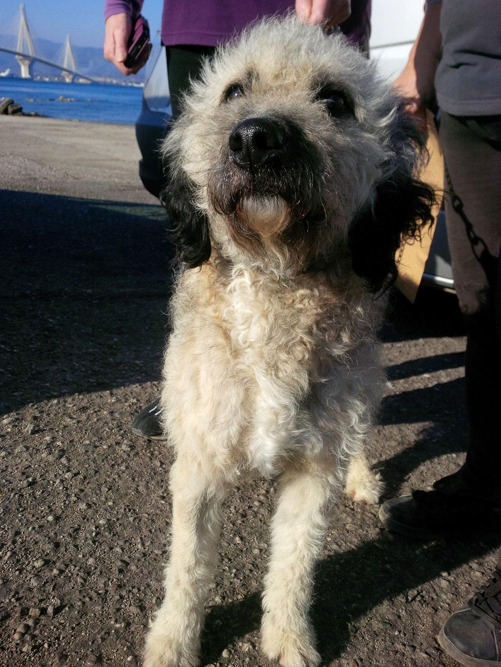 Fuzzy hound Niko