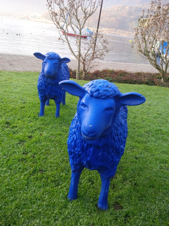 These sheep came to greet us as we walked dogs by the side of Lake Lucerne. As you probably know, they provide the blue milk which is traditionally used to create the blue veins in various types of Swiss blue cheese. They're also shorn annually to provide the knitting wool for smurf hats.