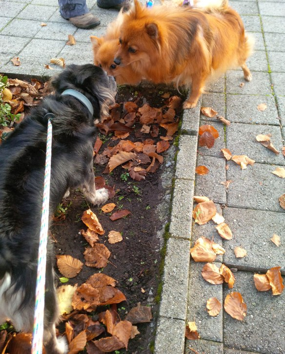 Souki and Diego, a very relaxed pair, exchange friendly greetings with Berti