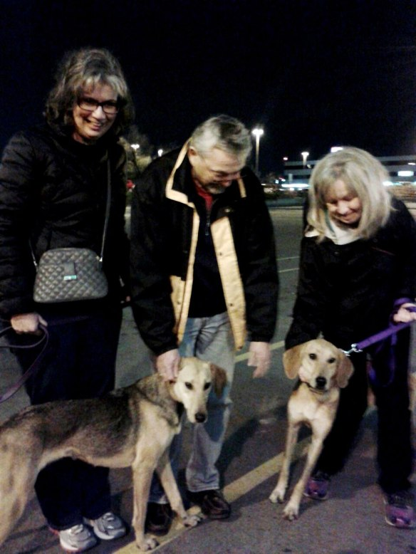 A rapturous welcome at Toronto airport for Ginger and Lilly