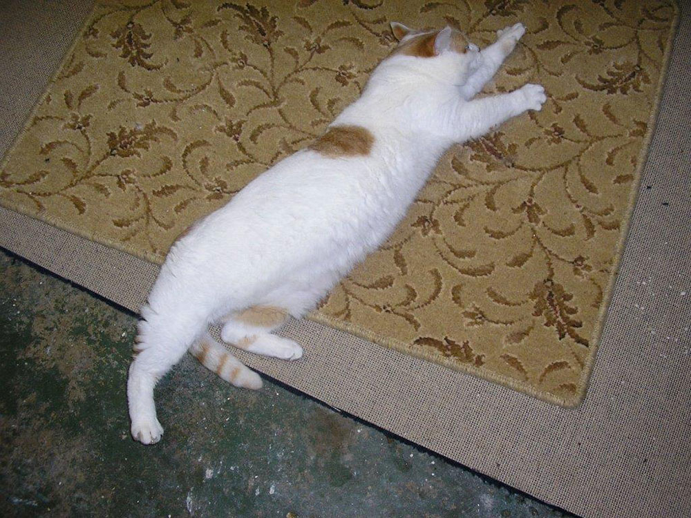 All stretched out