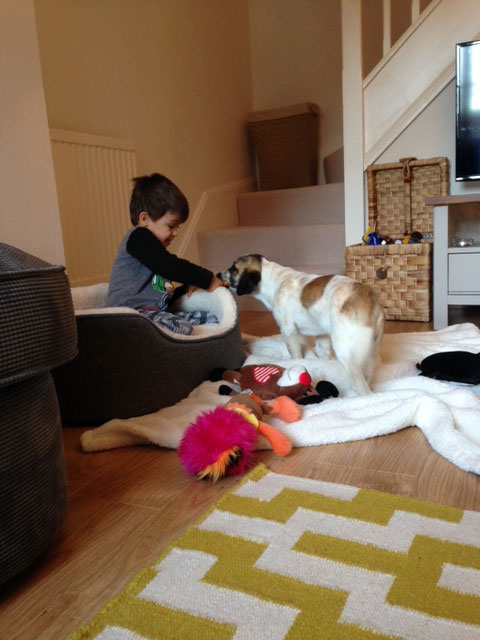 Buddy with Amy's son (the new dog bed is obviously very comfy!)