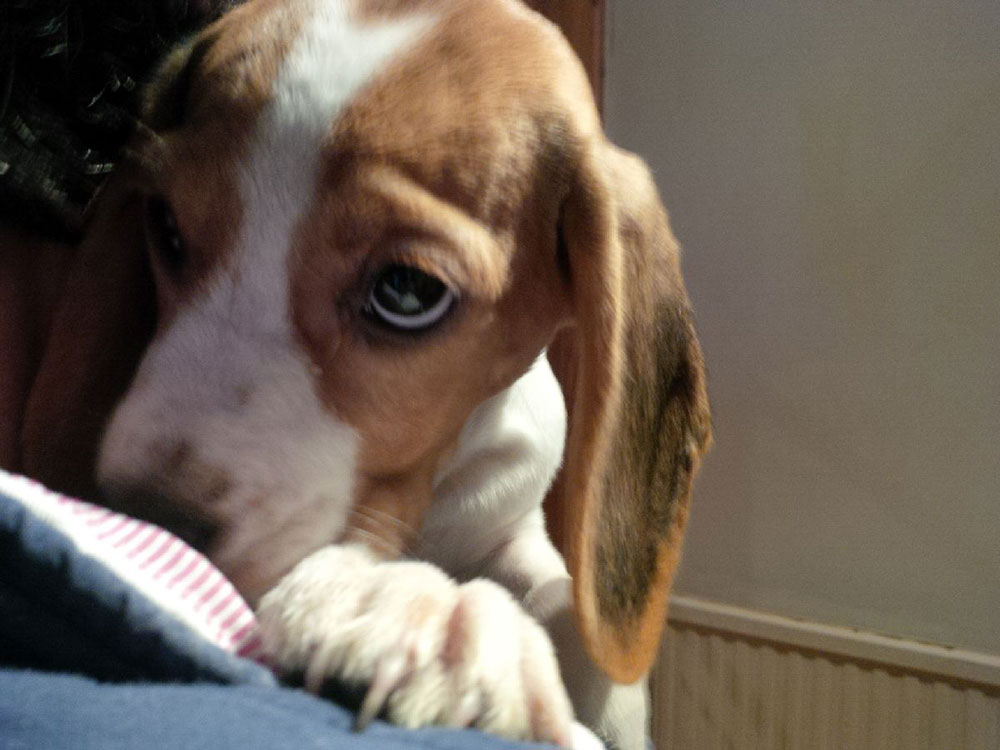 "Sage's irresistible puppy dog eyes! Her owner Sharica emailed us, saying: ""Just wanted to say thank you so much for everything in getting Sage to Bermuda. She is settling in very nicely."""