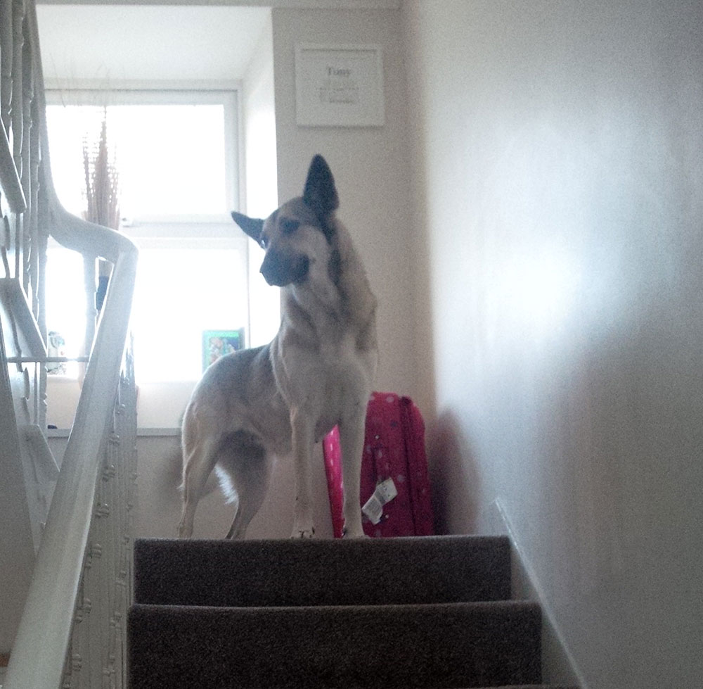 Lucy making sure she explores her new home thoroughly
