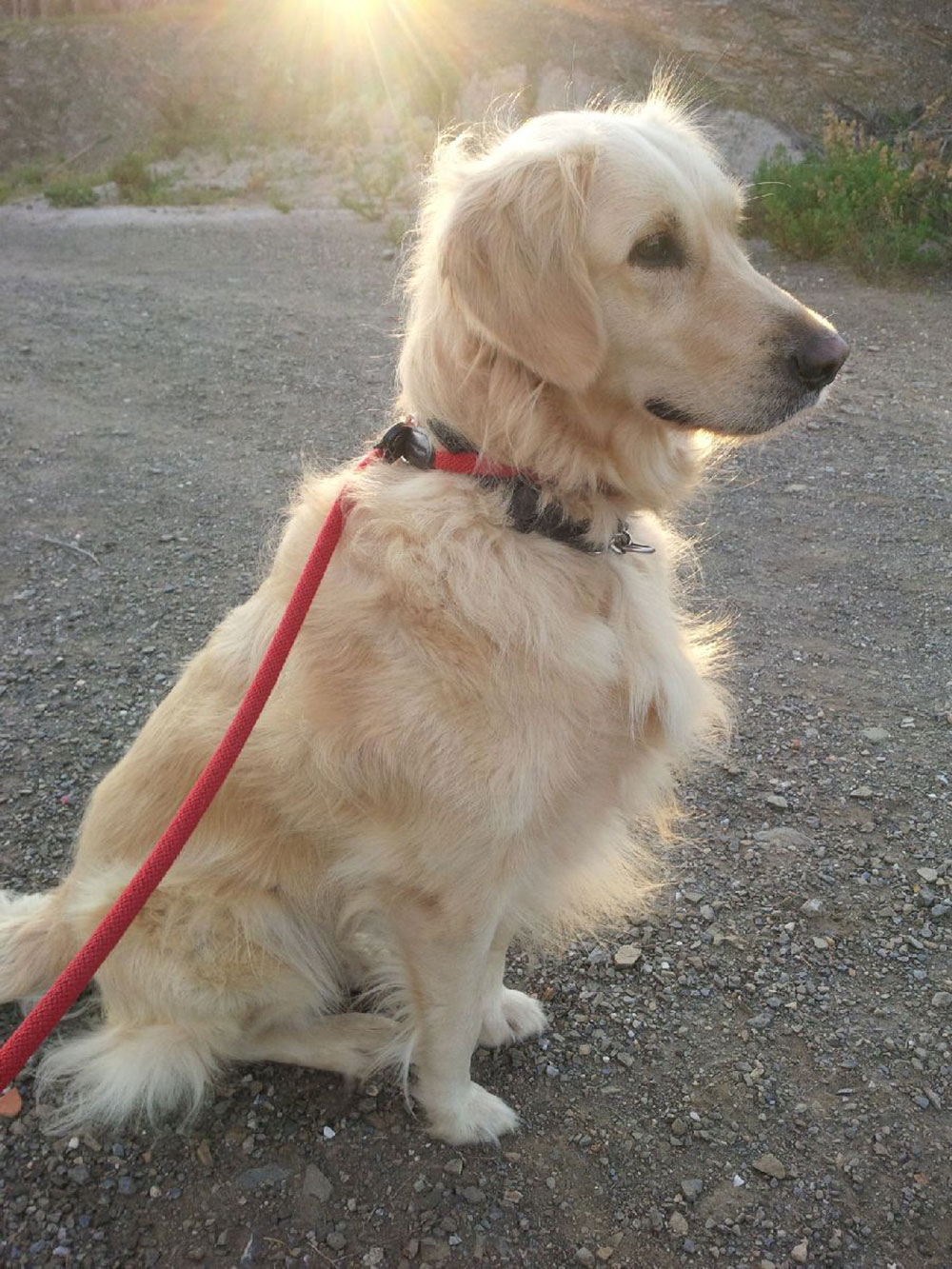 Rubia enjoying an early walk in the morning sunshine