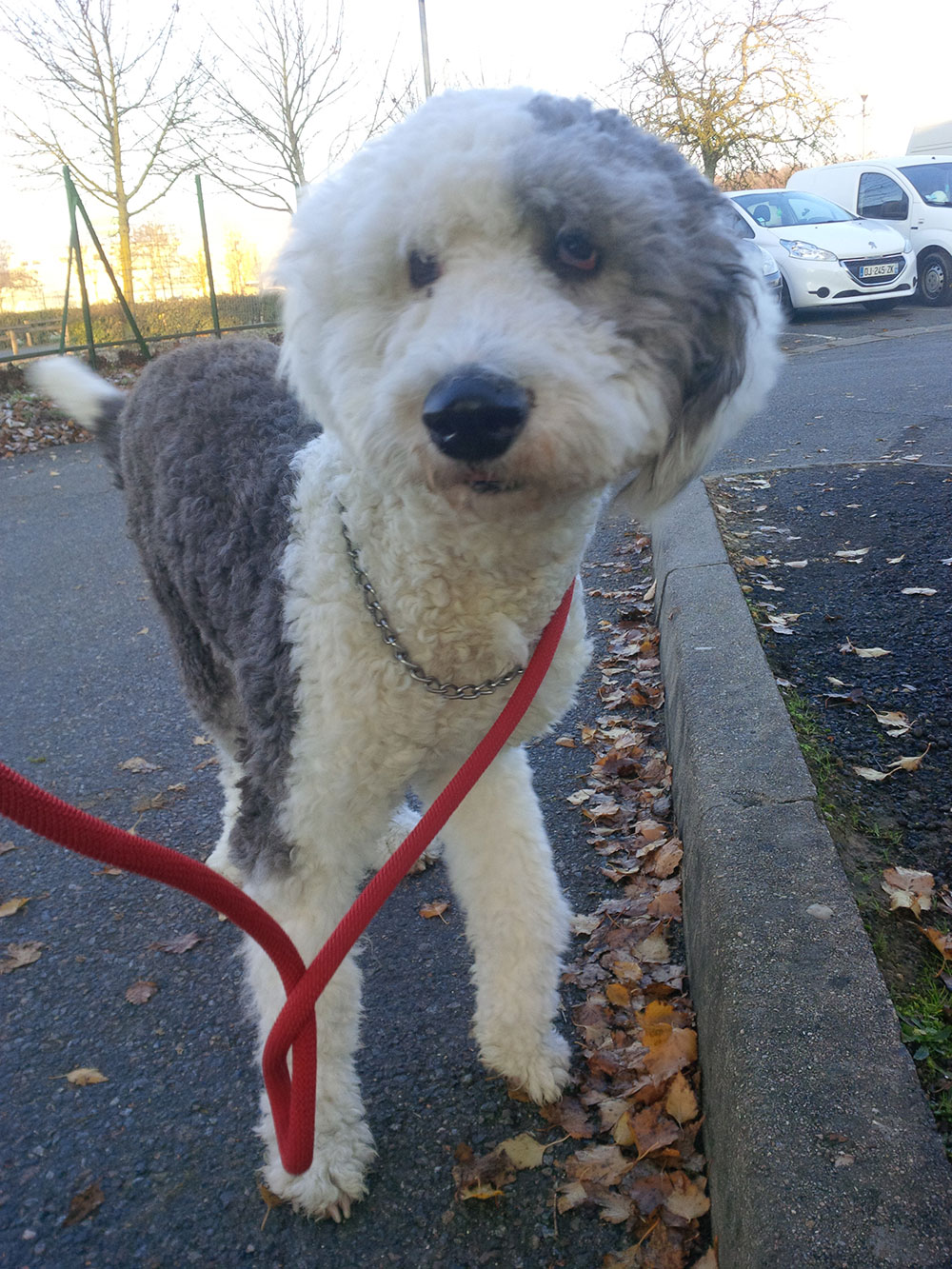 Lolita is a lovely gentle girl on her walks